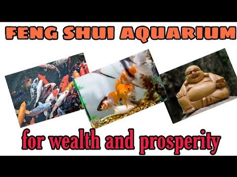 Feng Shui Aquarium L Vastu Fish L For Good Fortune