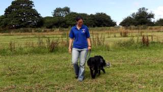 Dog Training Cornwall, Dog Boarding  Dog Obedience Training Truro Cornwall, Puppy Training Cornwall