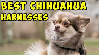5 Best Chihuahua Harnesses ✅ [2020 Updated List]