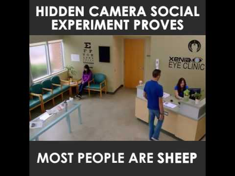 Are People REALLY Sheeple???