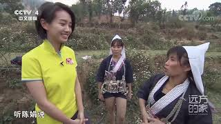[远方的家]世界遗产在中国 梯田中的哈尼人| CCTV中文国际