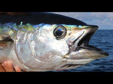 TUNA Fishing In The FLORIDA KEYS!