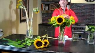 FRAIS une DIZAINE de FILMS: Organiser les Tournesols - Fleur de Cactus à Scottsdale, AZ