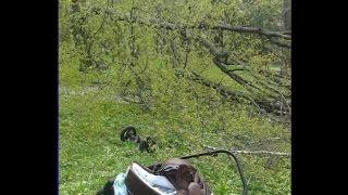 Подробиці інциденту у парку: дерево ледь не вбило маму з немовлям