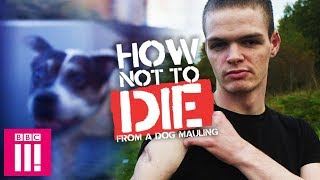 How Not To Die From A Dog Attack