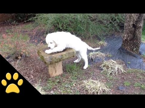 Funny Animal Video - Over 3 Minutes Of Hilarious And Cute Animal Moments