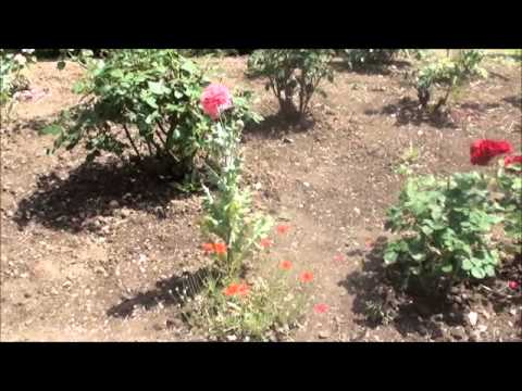 Visite globale jardin