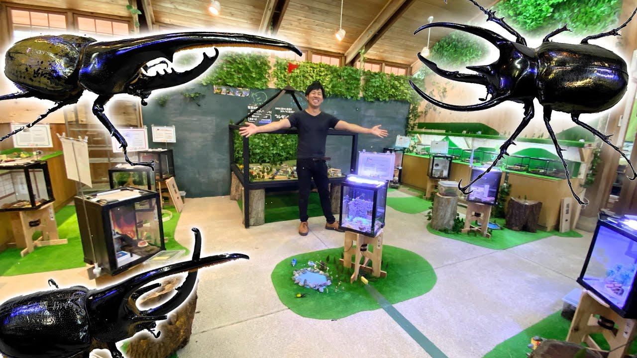 世界中のカブトムシ・クワガタを展示する昆虫館が楽し過ぎた・・・!