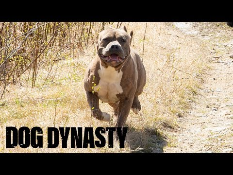 Hail Hercules – The Son Of Hulk! | DOG DYNASTY