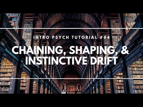 Chaining, Shaping, & Instinctive Drift (Intro Psych Tutorial #64)