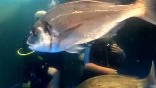 Buceo con rayas en Palma Aquarium Peque Páginas