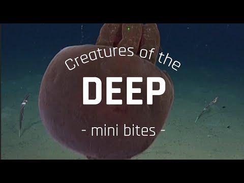 Jellyfish Roundup! | Creatures Of The Deep: Mini Bites