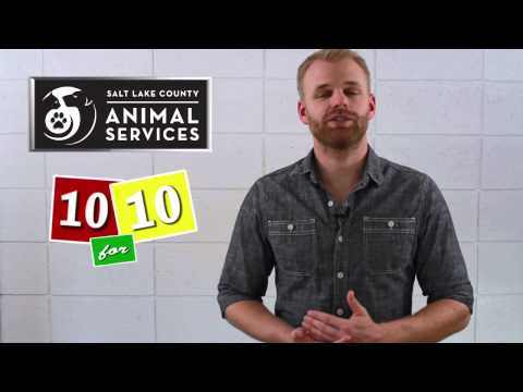 3 Essential Rescue Dog Training Tips