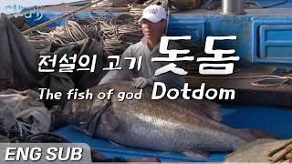 전설의 물고기, 바다의 로또, 돗돔 [Eng sub]  the fish of god