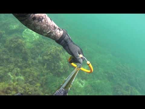 Spreafishing off Williamstown Jan 2017