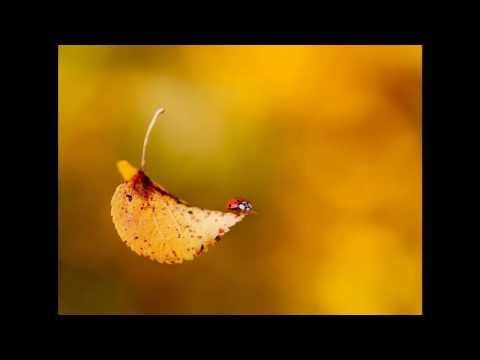 Autumn Leaves Английские стихи
