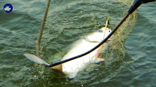 Awesome Catla Fish Catching Videos by Fishing Rod
