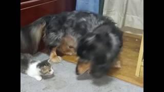 保護した子猫と老犬マサ12才の日々.