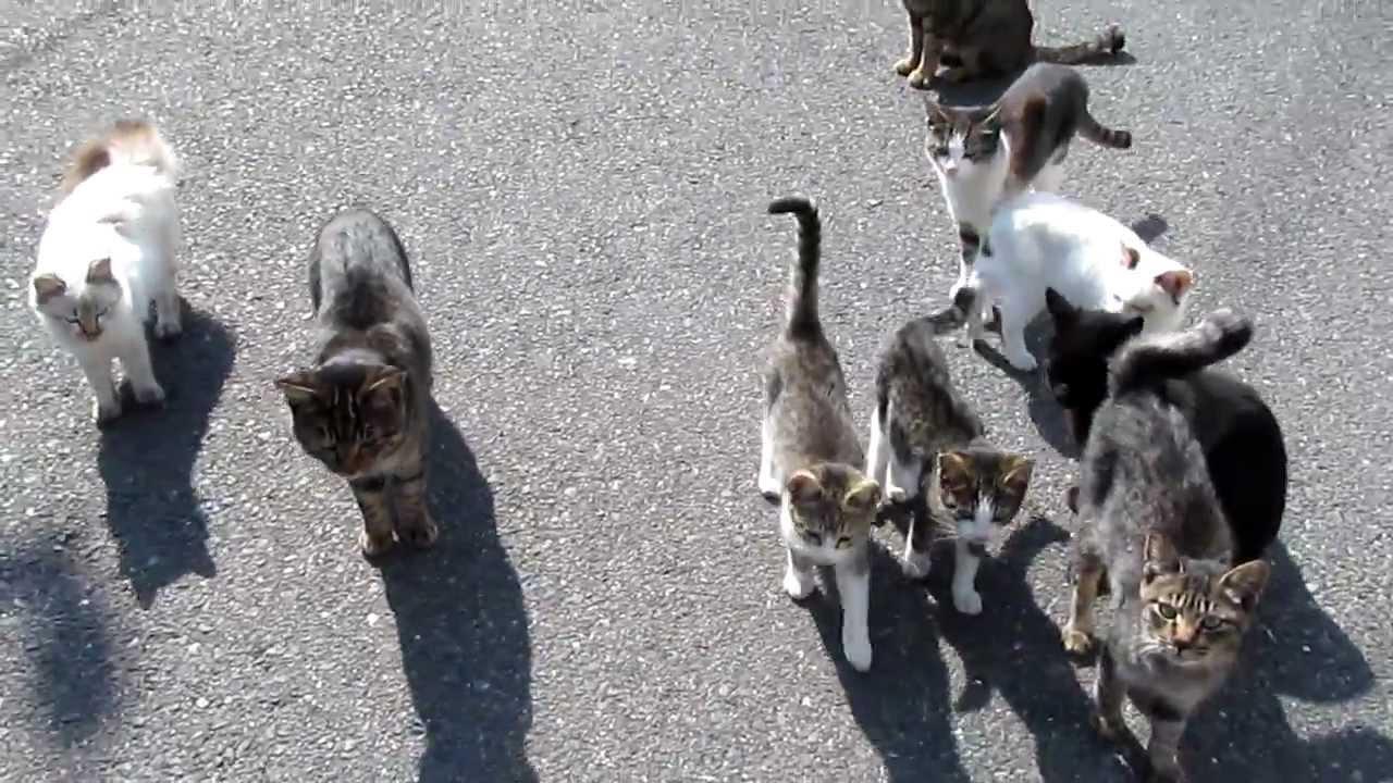 藍島の猫たち(1) - YouTube