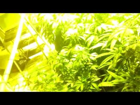 How to make a  cheap grow room--closed system