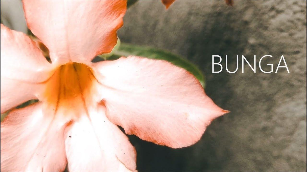 BUNGA | Short Film