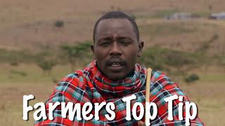 Shamba Shape Up Sn 06 - Ep 4 Cattle, Chicken, Maize Varieties(Swahili)