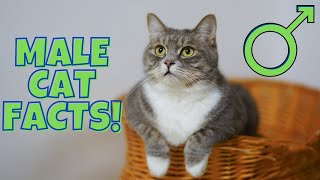 12 Surprising Facts About Male Cats (#9 is Disturbing)