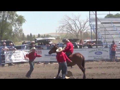 para koboi kewalahan untuk menjinakkan kuda dalam perlombaan pacu kuda