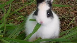 FUNNY BUNNY VIDEO | NEW GUEST IN OUR FARM | RABBIT |HEALTHY VILLAGE FOOD