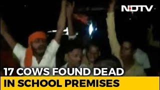17 Cows Locked Up Inside Classroom In Madhya Pradesh Die, Probe Ordered