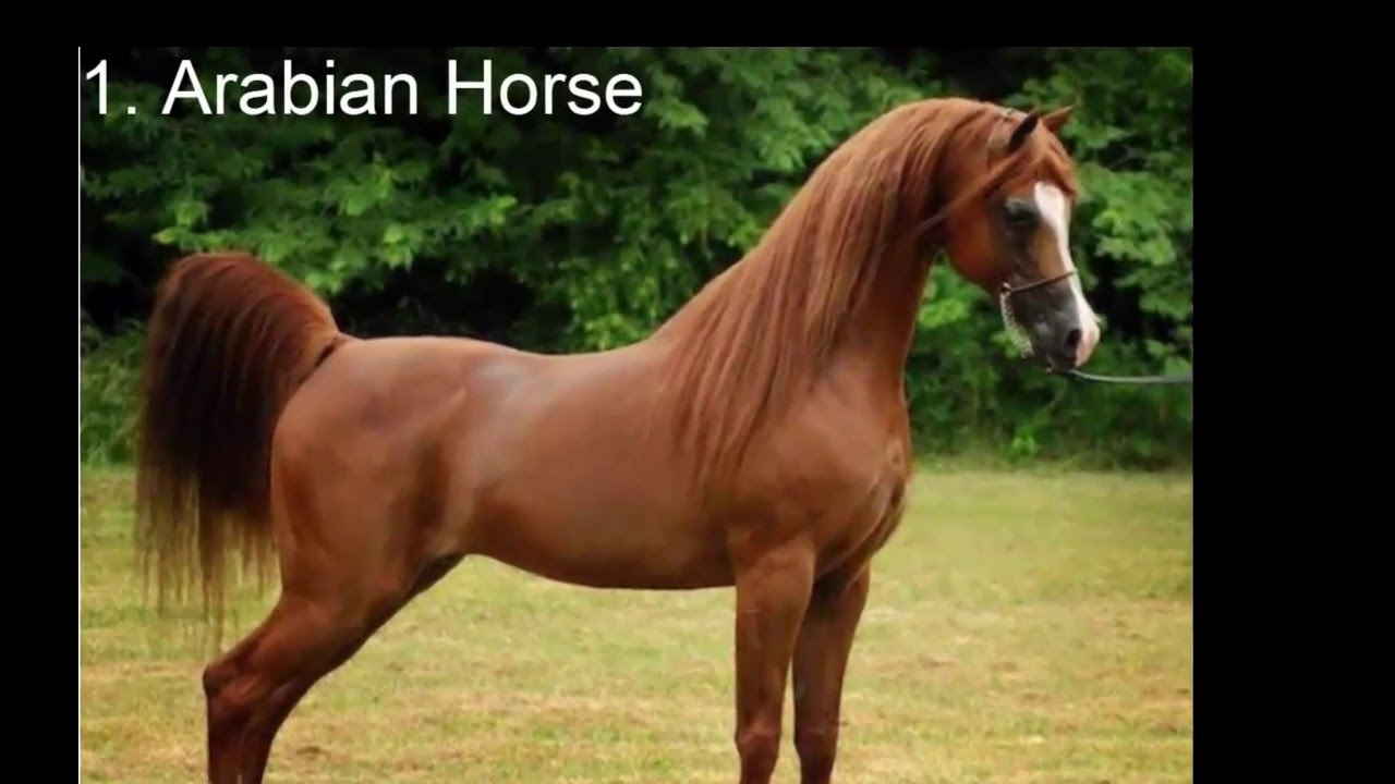 Play the Best Horse Games (800 Amazing Horse Games!)