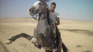 دحية التعامره في الأردن