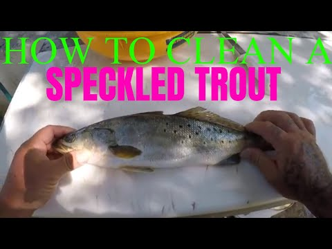 HOW TO CLEAN A SPECKLED TROUT (SPOTTED SEA TROUT)