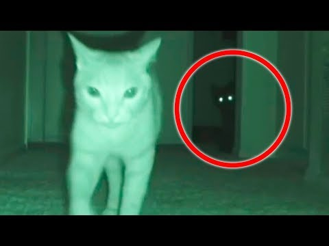 PETS SEE ghost that frightens them // MoMo