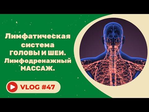 #47 Лимфатическая система головы и шеи. Лимфодренажный массаж.