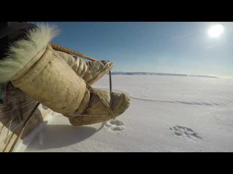 Inuit Traditions - Seal Hunting In Greenland On Dog Sleds