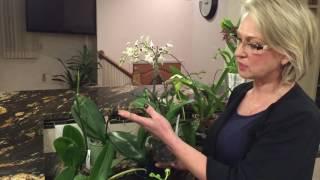 видео что делать с орхидеей после цветения