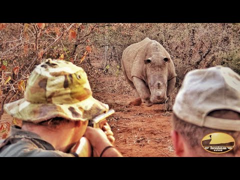 Rhino Green Hunt – BAREFOOT stalking!