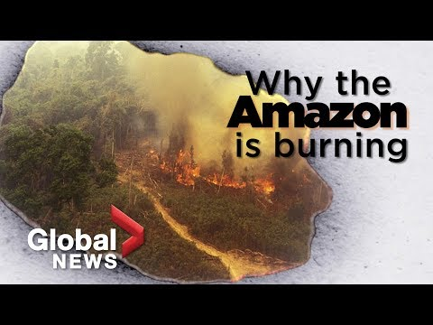 Amazon forest fire: