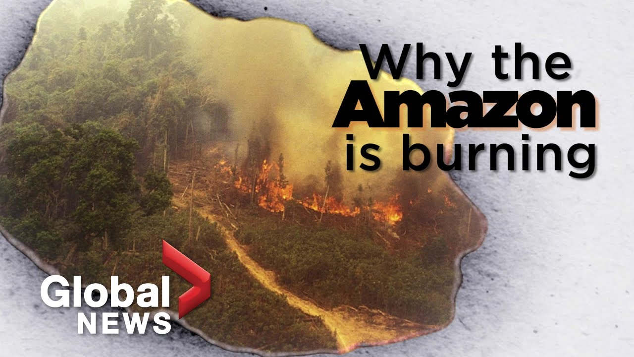 Amazon Forest Fire What It Tells Us About Deforestation Youtube