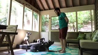 How Do I Teach My Dog To Down?