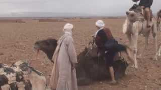 Marrakech - Zacora - riding camels in the desert