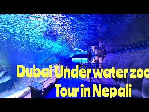 Dubai  Aquarium and UnderWater Zoo Tour in Nepali I Prem Vlog