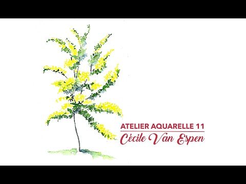 Atelier Aquarelle 11 : Mimosa