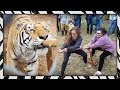 watch he video of Humans vs. Tigers! 🐯 Tiger Tug-o-War