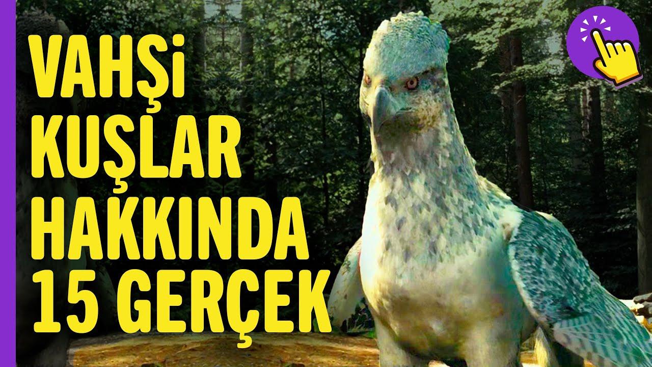 Dünyanın En Tehlikeli Kuşları - Yırtıcı Kuşlar Hakkkında 15 Bilgi | Hayvanlar Alemi - Aklında Olsun