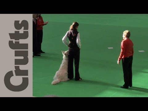 World Cup Obedience Part 11 (Scent) - Crufts 2012