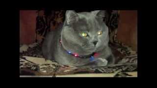 Ошейник для кота
