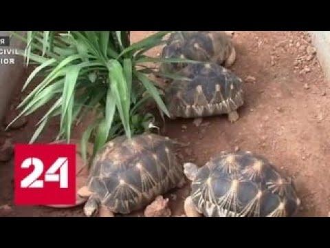 На Балеарских островах обнаружена нелегальная ферма по разведению редких черепах – Россия 24
