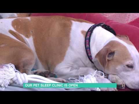 how-to-stop-your-pet-waking-you-up-|-this-morning